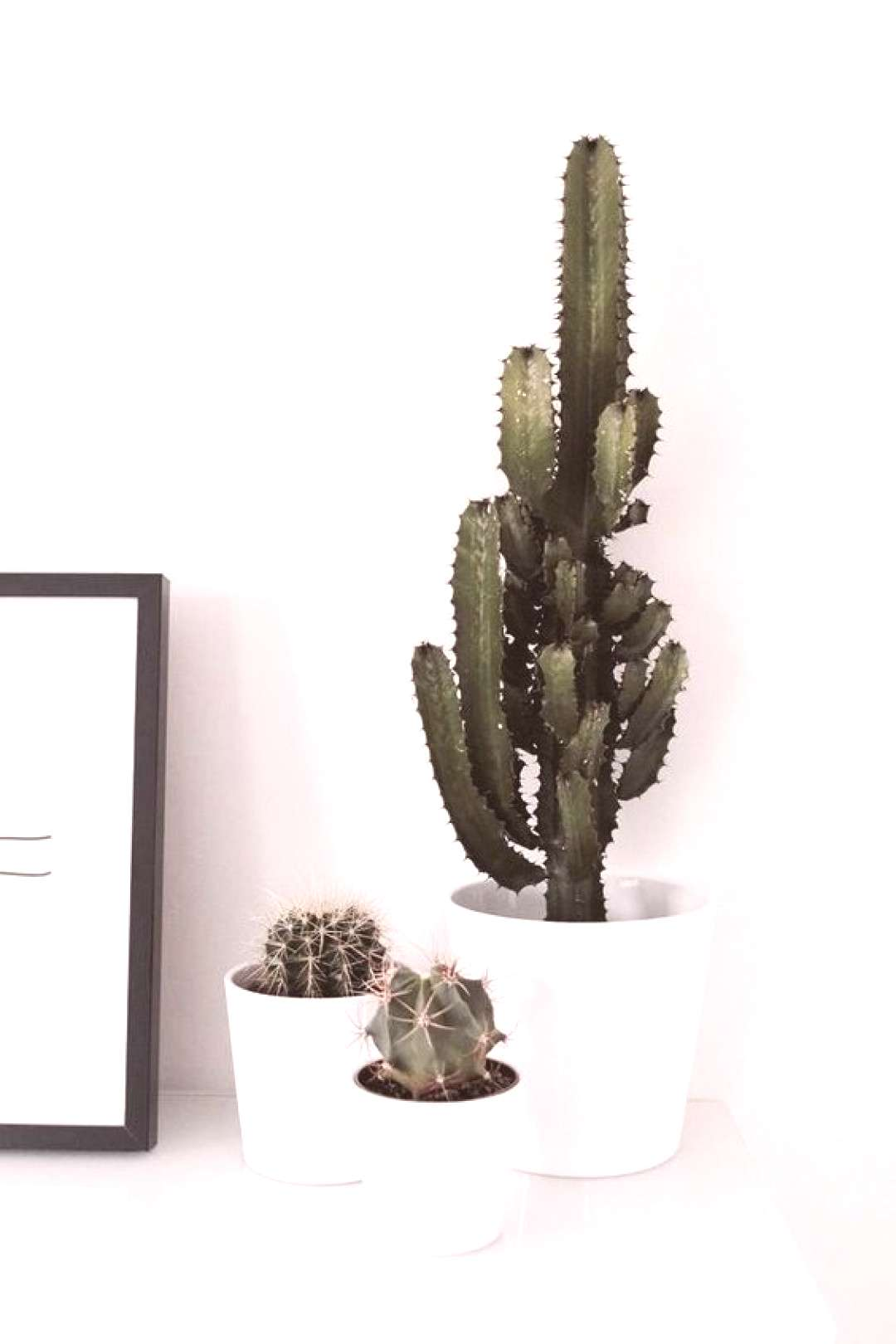10 Chill Indoor Plants for Minimalist Homes